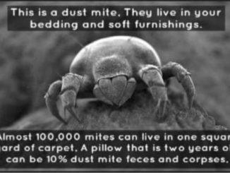 Dust Mites 2